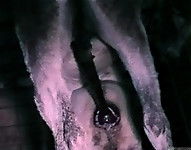 Hardcore farm bestiality of two stallions ends with a cumshot - picture 25