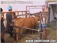 Asian female gives a very nice rimjob for a farm animal - picture 1