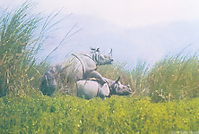 Gigantic rhinos have an outstanding outdoor sex - picture 3