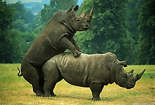 Gigantic rhinos have an outstanding outdoor sex - picture 7
