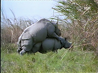 Gigantic rhinos have an outstanding outdoor sex - picture 13