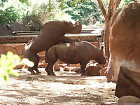 Gigantic rhinos have an outstanding outdoor sex - picture 22