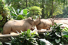 Gigantic rhinos have an outstanding outdoor sex - picture 24