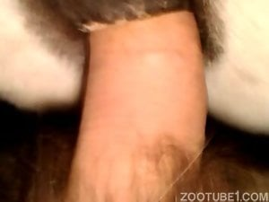 Sweet bestial sex in close-up with my perverted husband