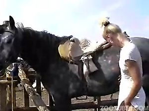 Blonde milfs share a stallion's dick in a zoo porn video