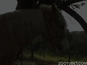 Redhead farm girl in black bikinis sucks a horse cock