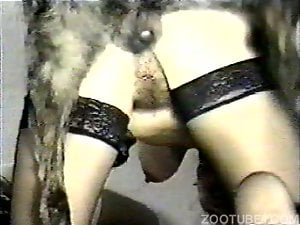 Sexy bitch in stockings gets hardly drilled by the doggy