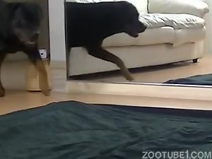 Hot chick gets properly fucked by her dog in a zoo porn scene