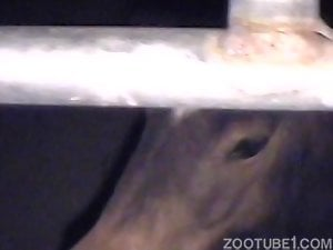 Man gives a rimjob for a horse and fucks it from behind