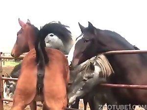 sex-crazed mare in heat