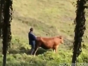 Cow guy fucks What would