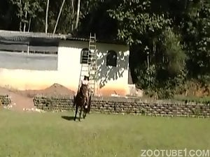 all horse-2