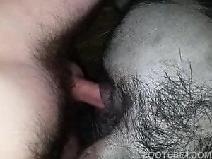 fucking pig