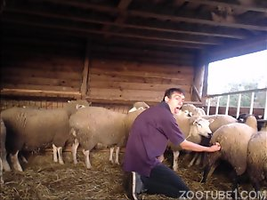 Amateur perverted boy fingering sheep in the pussy