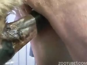 Horse makes woman squirt!